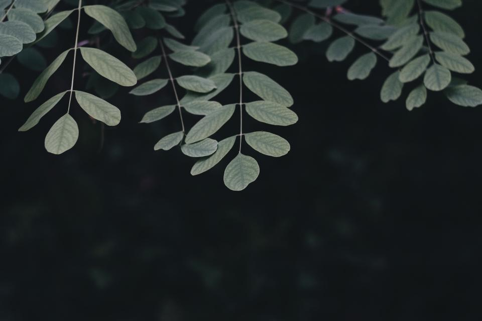 dark green leaf plant tree nature