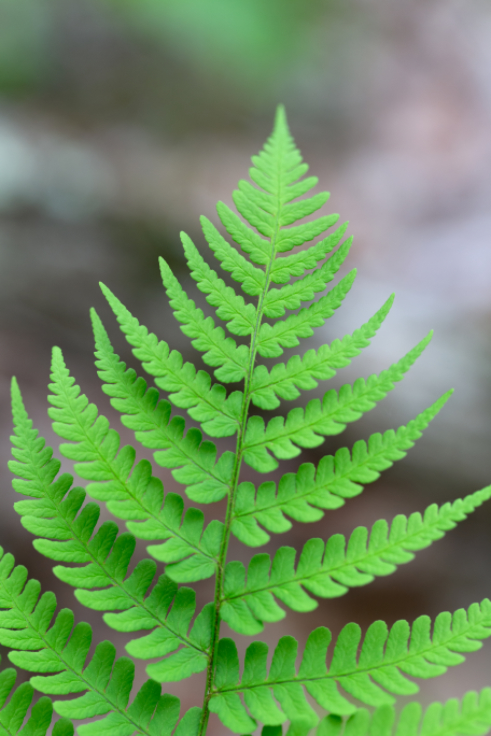 fern green background plant botany symmetry closeup detail leaf leaves natural bright woods forest ecology