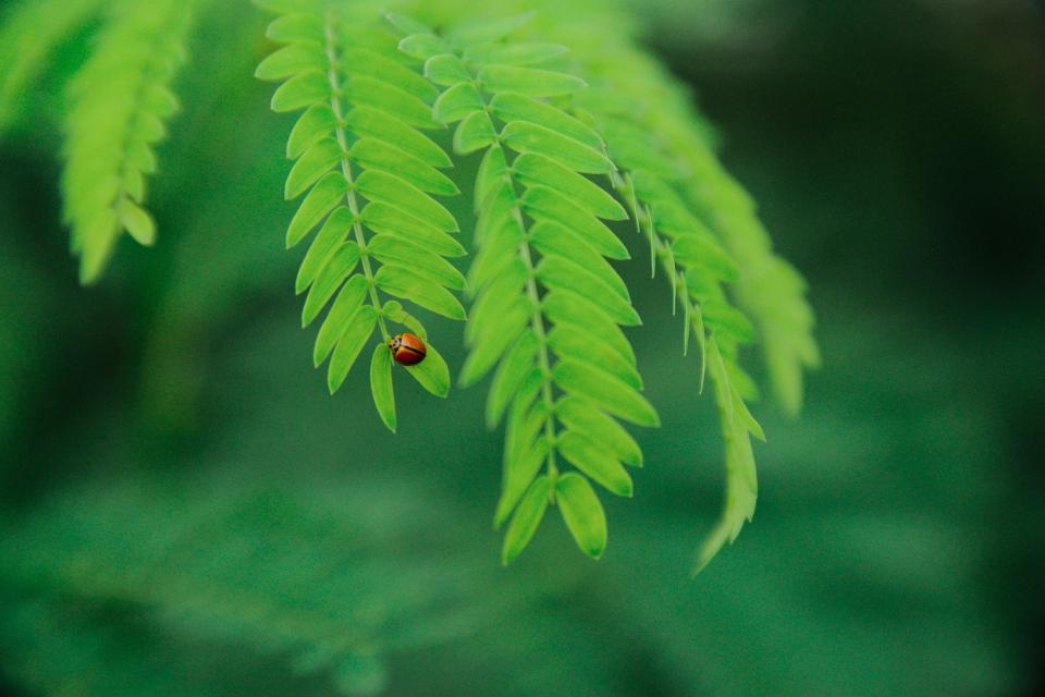 green leaf plant nature beetle bug insect blur