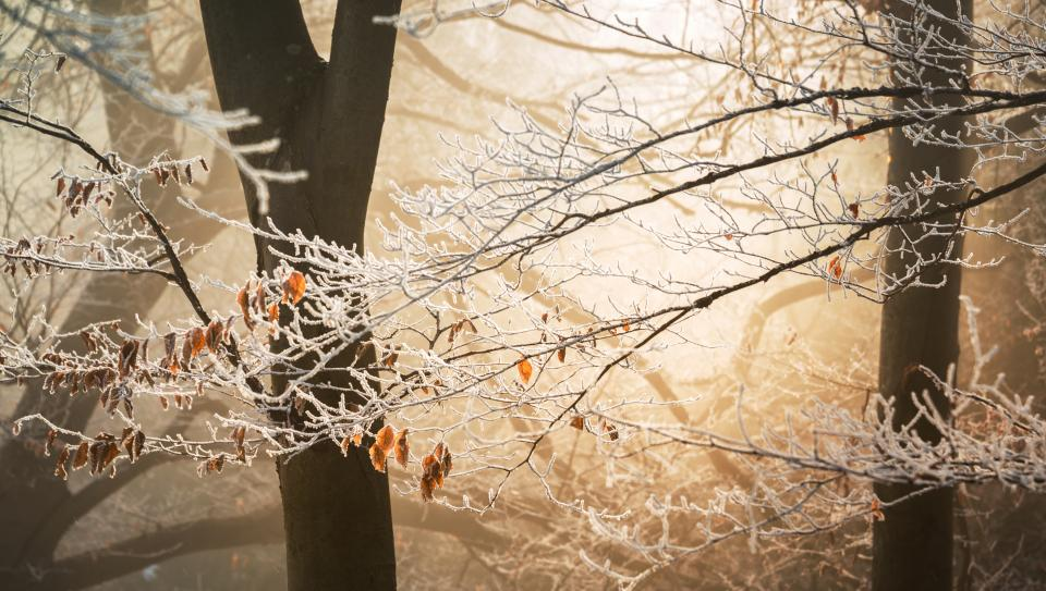 snow winter white cold weather ice trees plants nature woods forest autumn fall