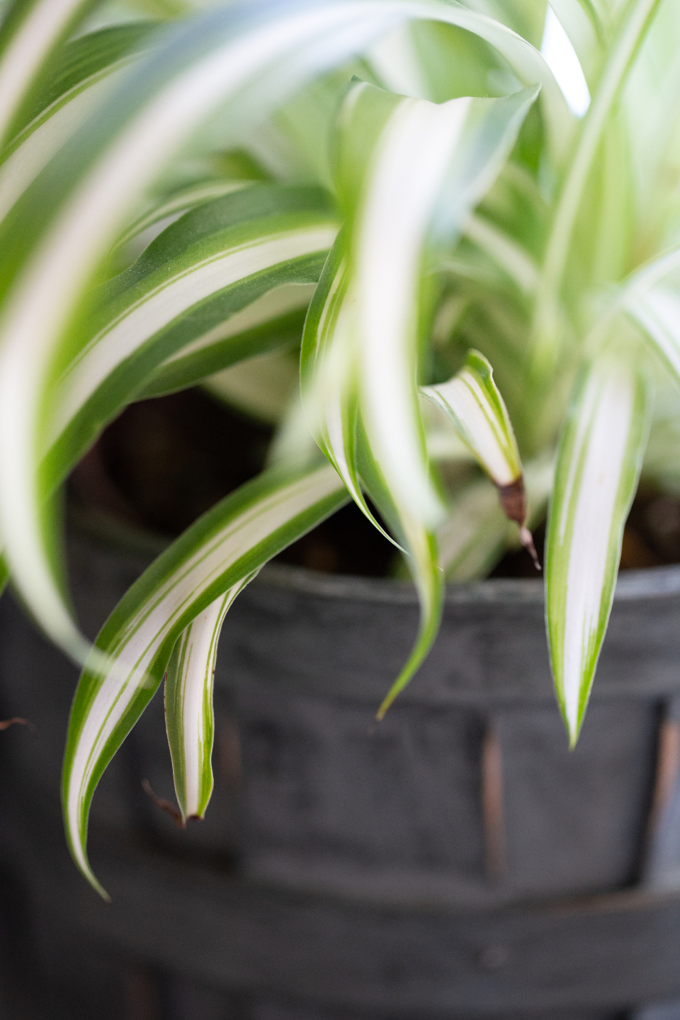 house plant macro indoor decor close up green plantlife planter potted leaf leaves nature grow growth botany decoration detail