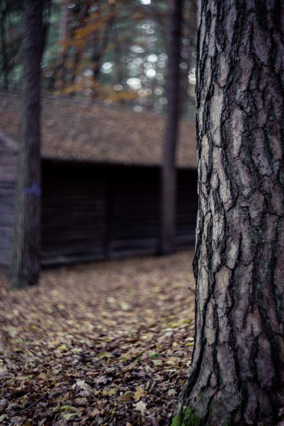 tree plant nature leaf fall outdoor hut