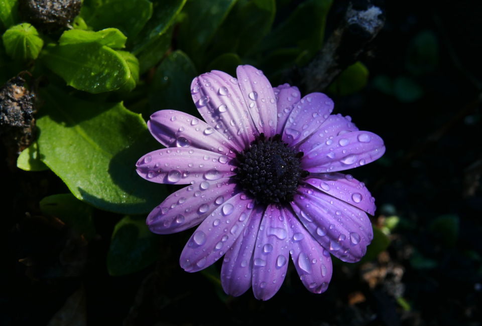 rain flower close up macro plants garden fresh beautiful droplets wet weather climate nature outdoors environment flower pedals