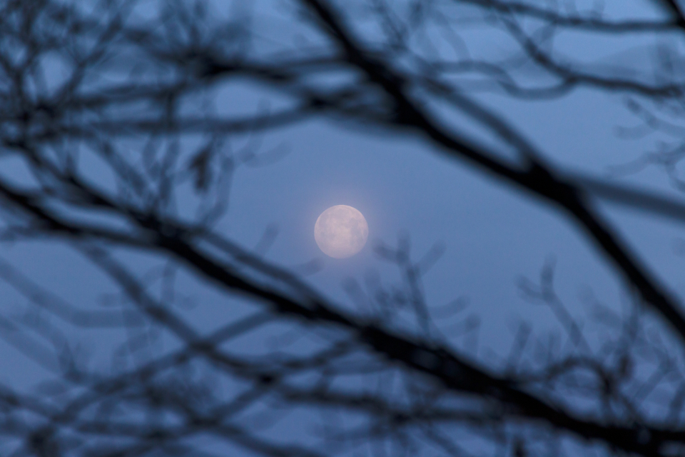 moon tree branches glow sky nature outdoors full moon moonlight forest silhouette