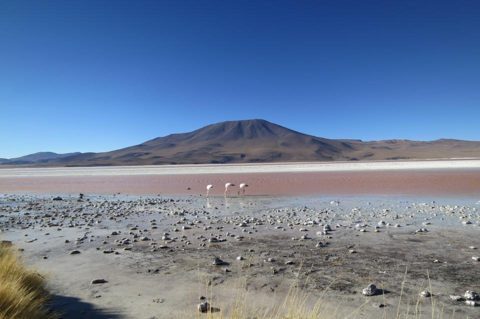 Laguna Colorada Bolivia landscape mountains sky sand birds