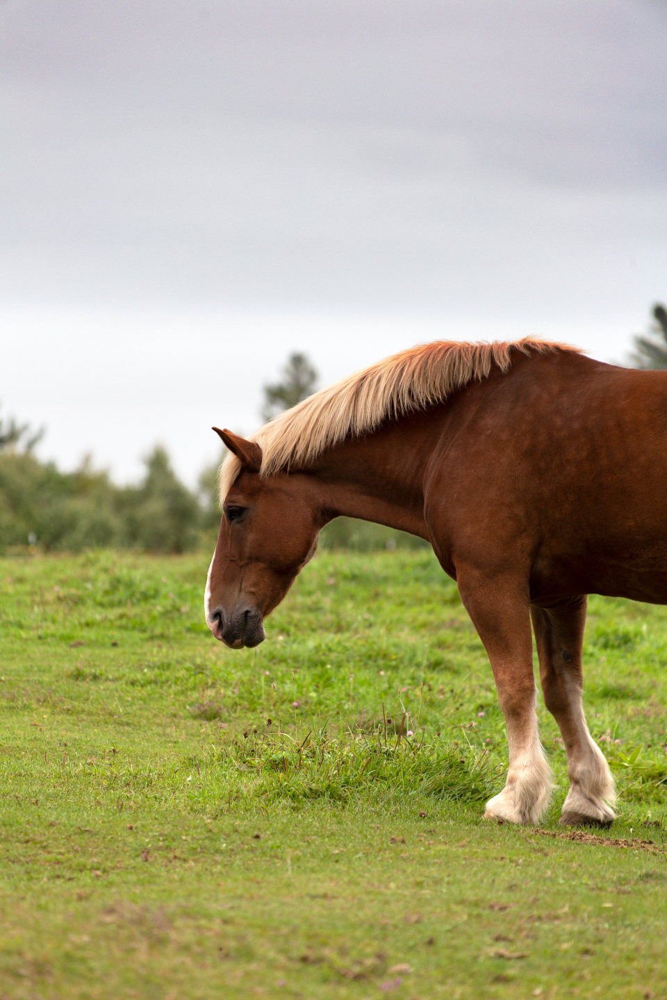 horse animal countryside equine farm field grass outdoors rural nature country pasture sky