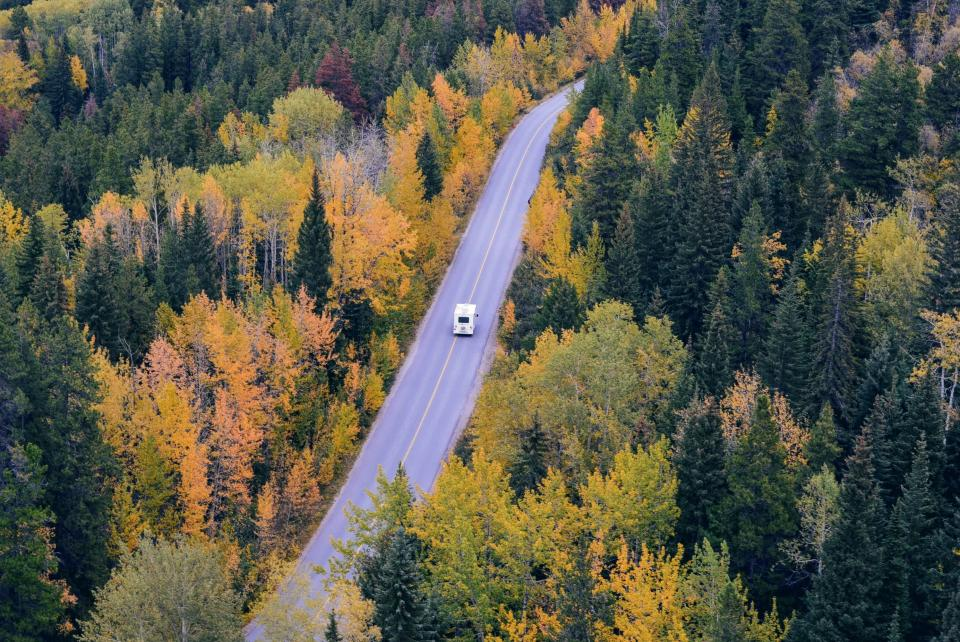 trees forest woods nature road travel transportation vehicle autumn fall