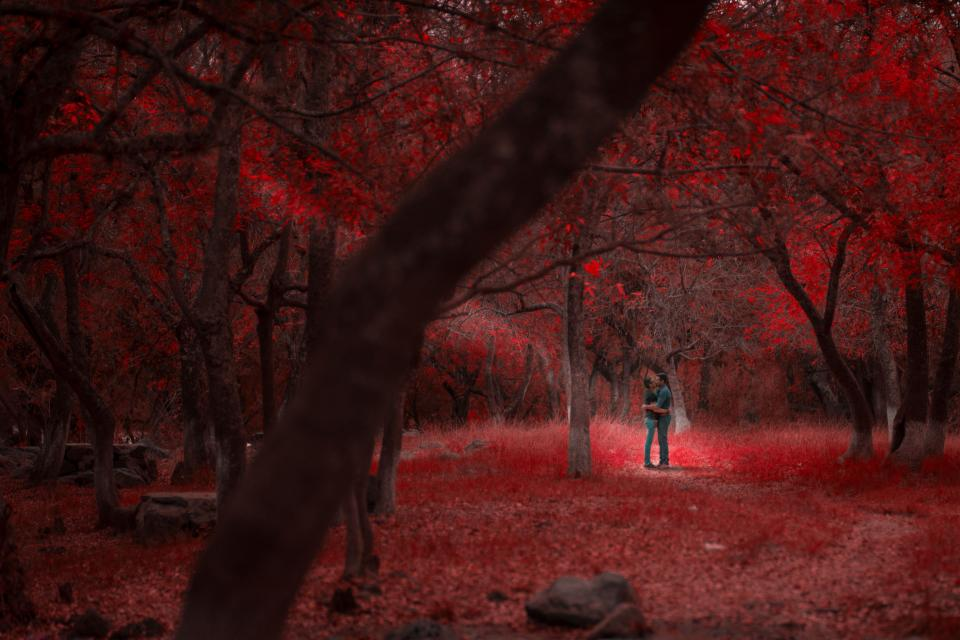 nature forest trees woods red people couple love romance sunlight