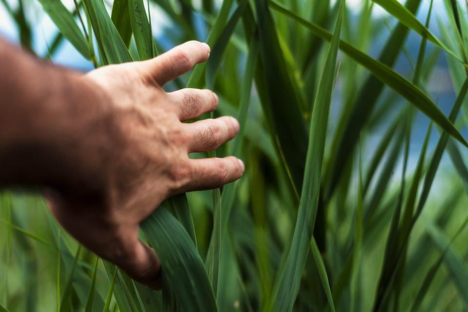 green plant nature farm field agriculture hand
