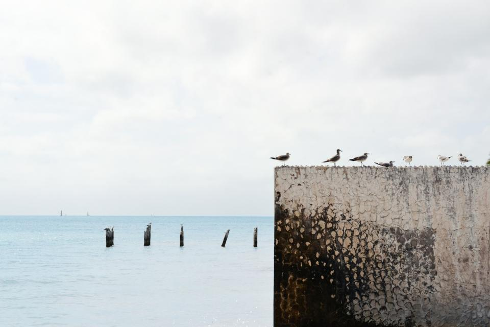 grey sky clouds water poles birds seagulls wall ocean