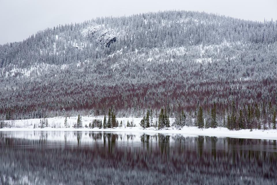 mountain trees highland landscape nature trees snow winter