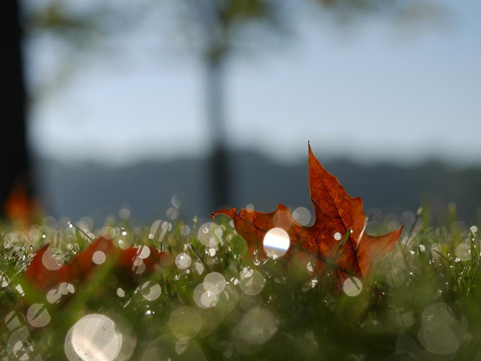leaf orange nature grass fall autumn blur bokeh