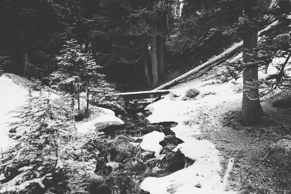 forest woods river stream water bridge wood trees logs black and white winter snow