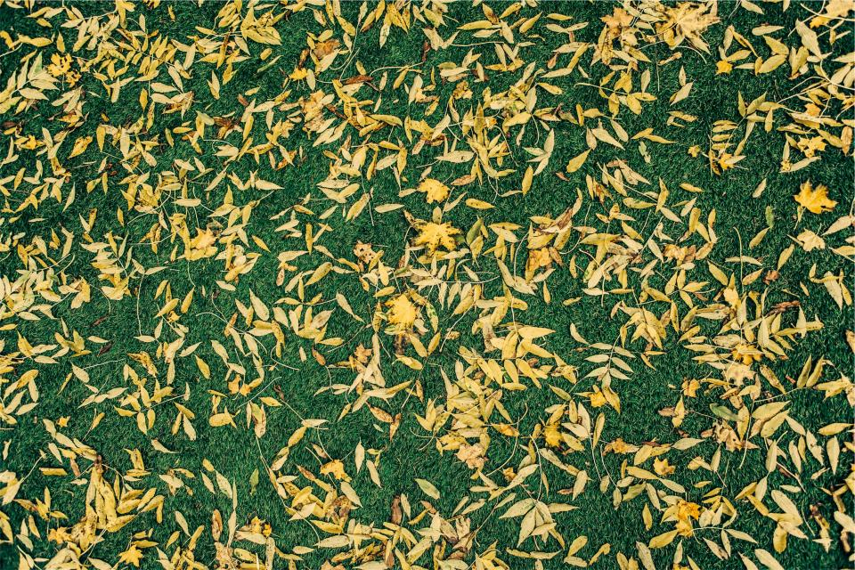 grass leaves ground