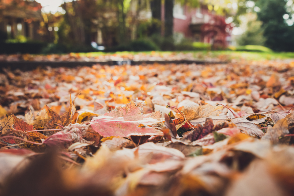 fallen leaves nature autumn fall close up street neighborhood outdoor house bokeh tree plant detail colorful