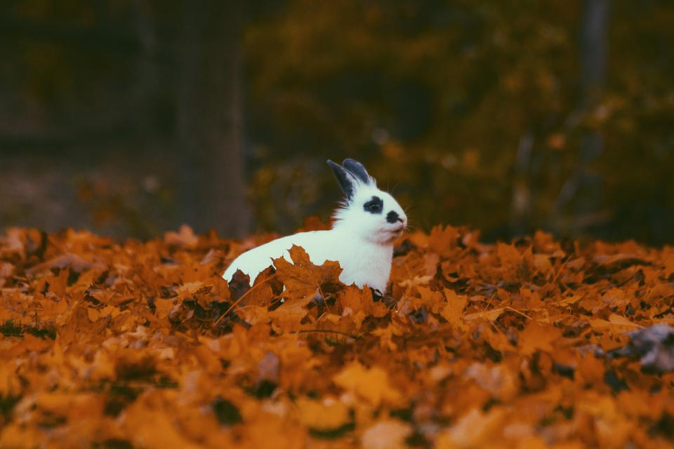 free photo of leaves  fall