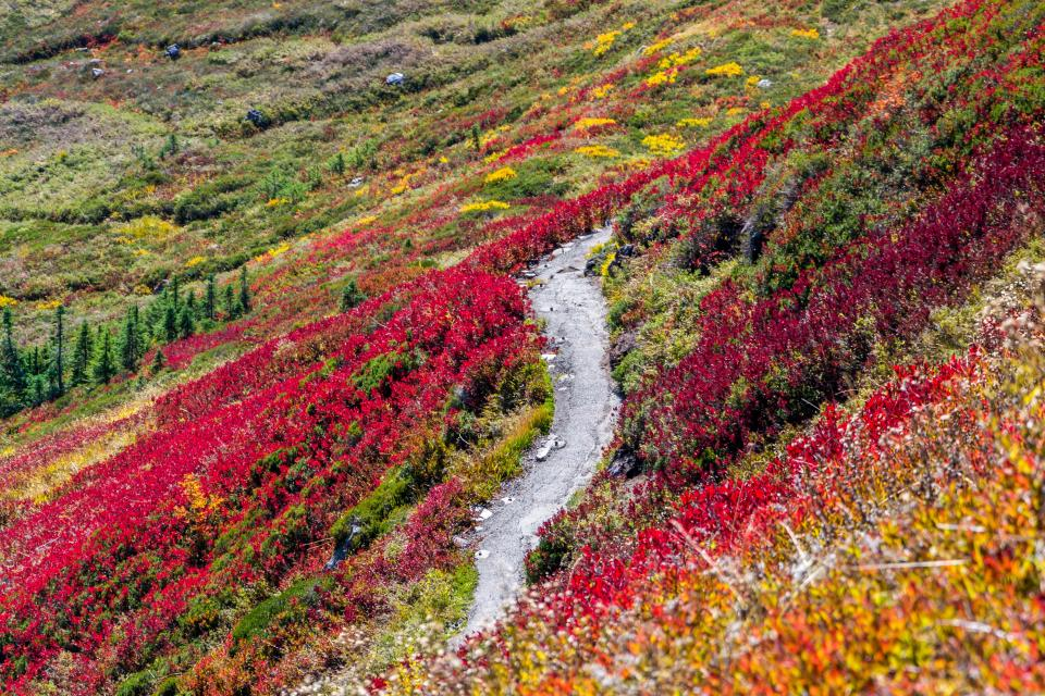 mountain highland tree plant grass flower colorful fall autumn rock landscape nature