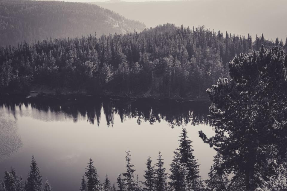 black and white grey forest trees nature outdoors lake water hills mountains