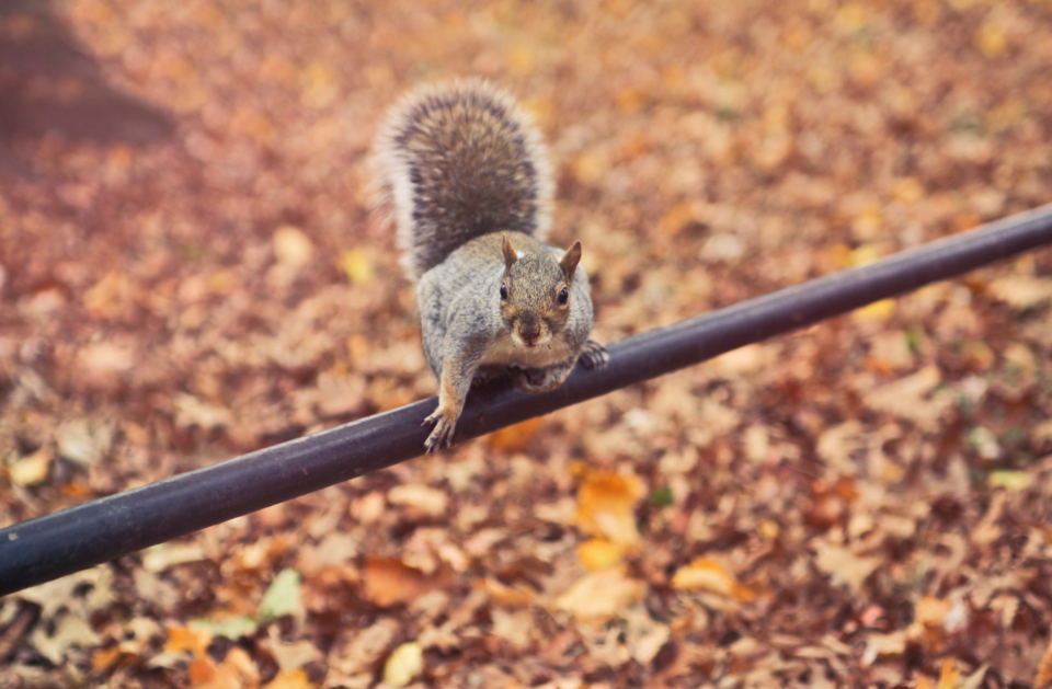 squirrel startled pole animal leaves autumn tail fur