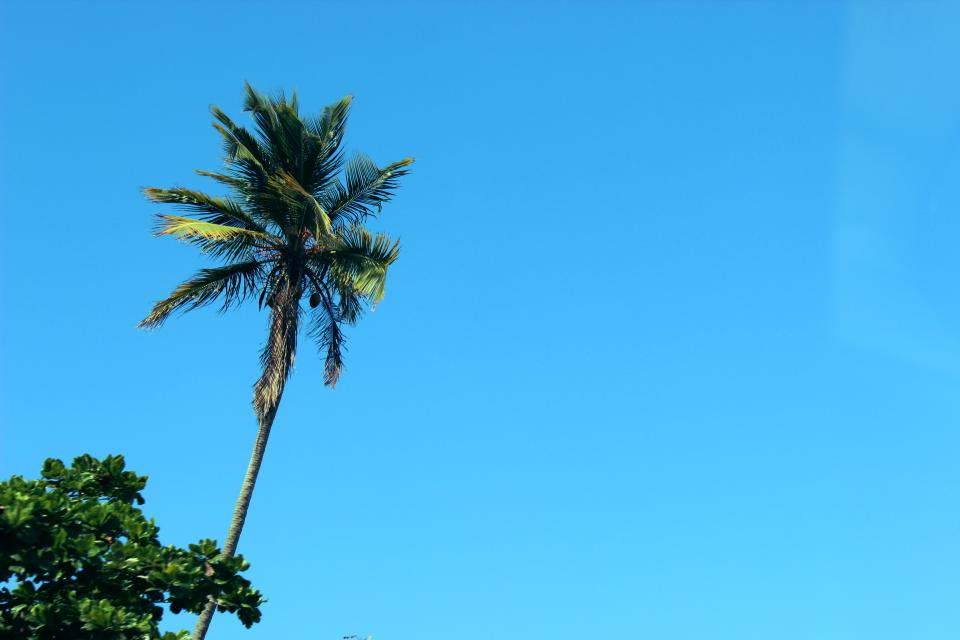 blue sky sunshine summer palm trees nature