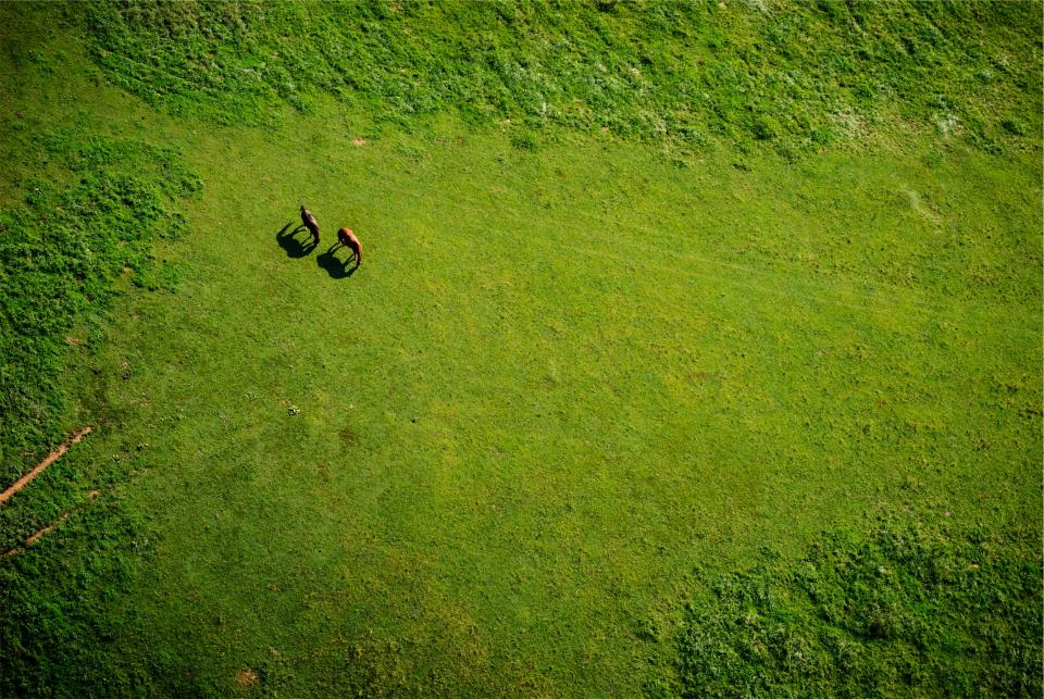 green grass horses animals aerial