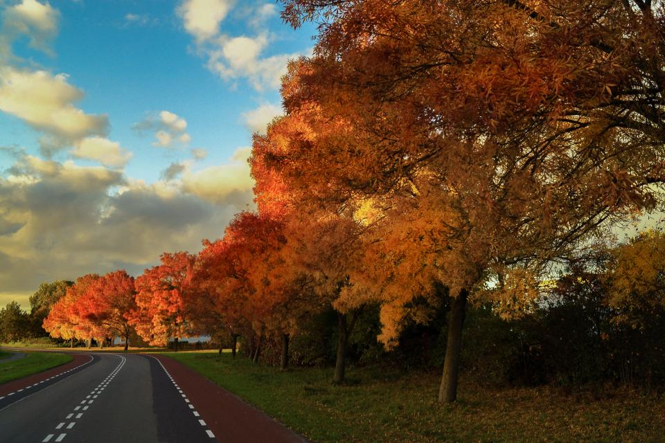 autumn fall trees leaves colors road sky rural