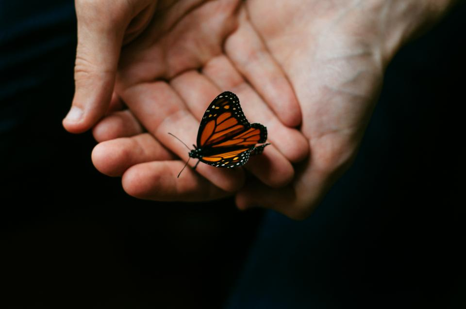 person people hands hold butterfly perched beautiful still bokeh