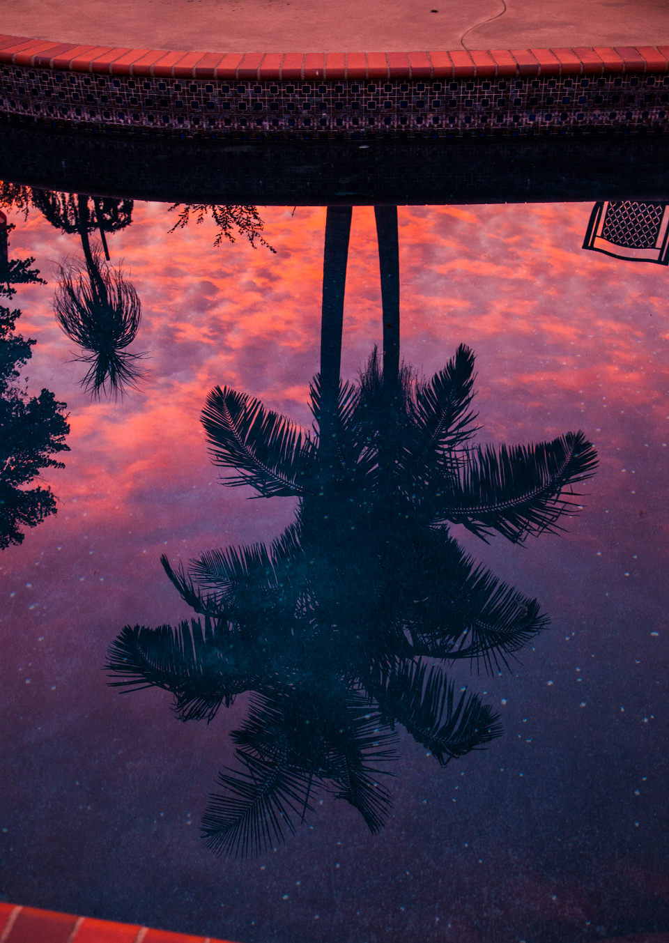 palm tree reflection pool travel red sunset