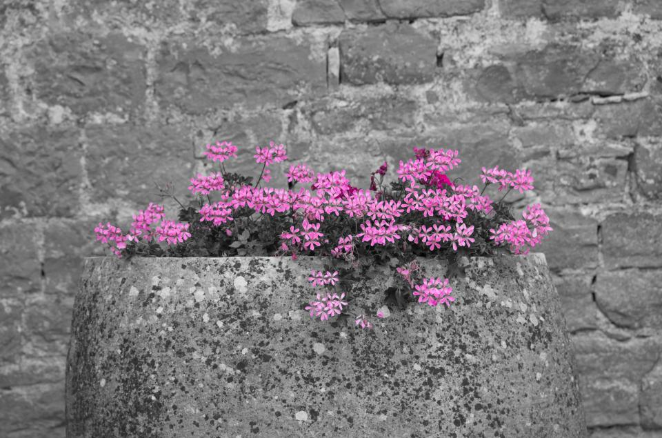 pink grey flowers petal blossom autumn fall wall bricks