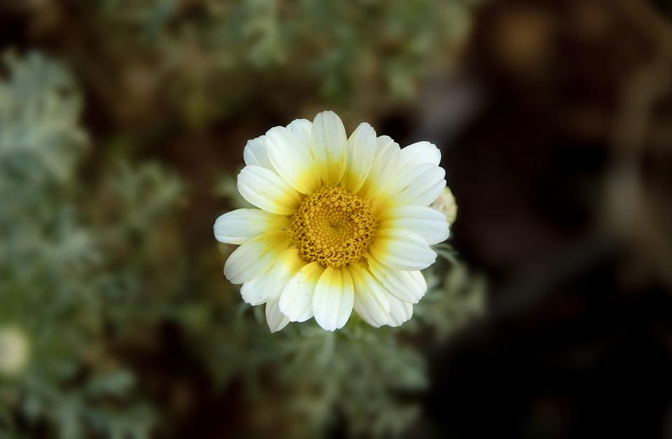 white yellow petal flower plant bloom blur