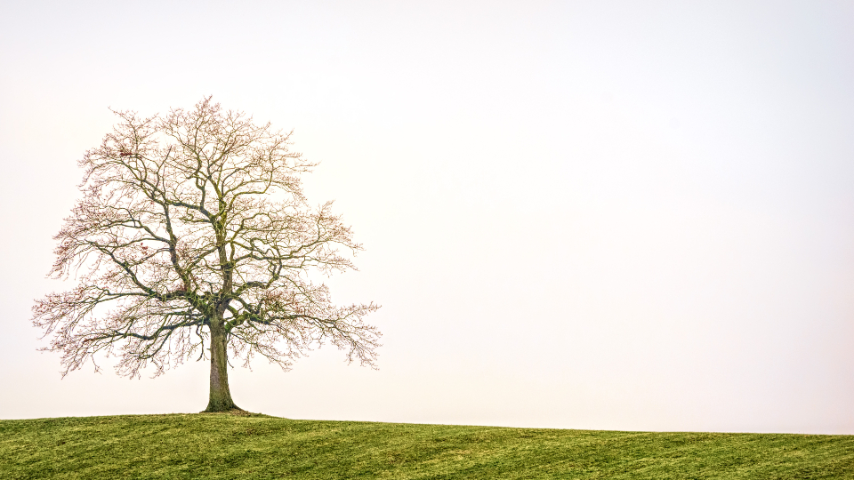 lonely tree countryside nature autumn winter alone green grass season cold mist clouds