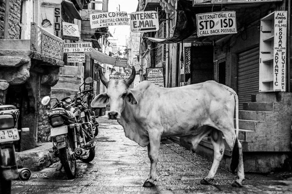 architecture building infrastructure black and white cow animal pet motorcycle poster alley