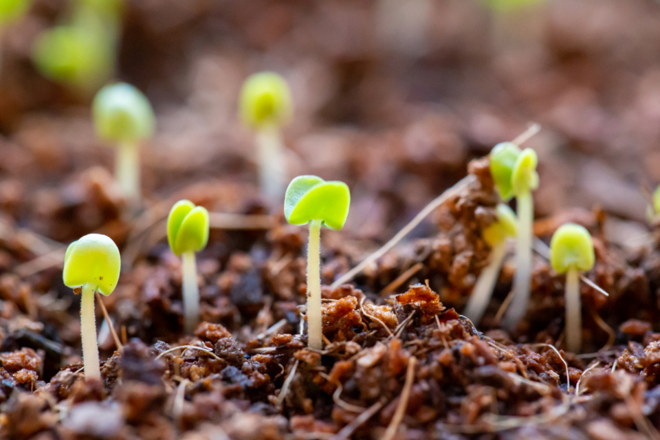 seedlings growing soil plant nature life agriculture botany earth dirt green environment ecology macro