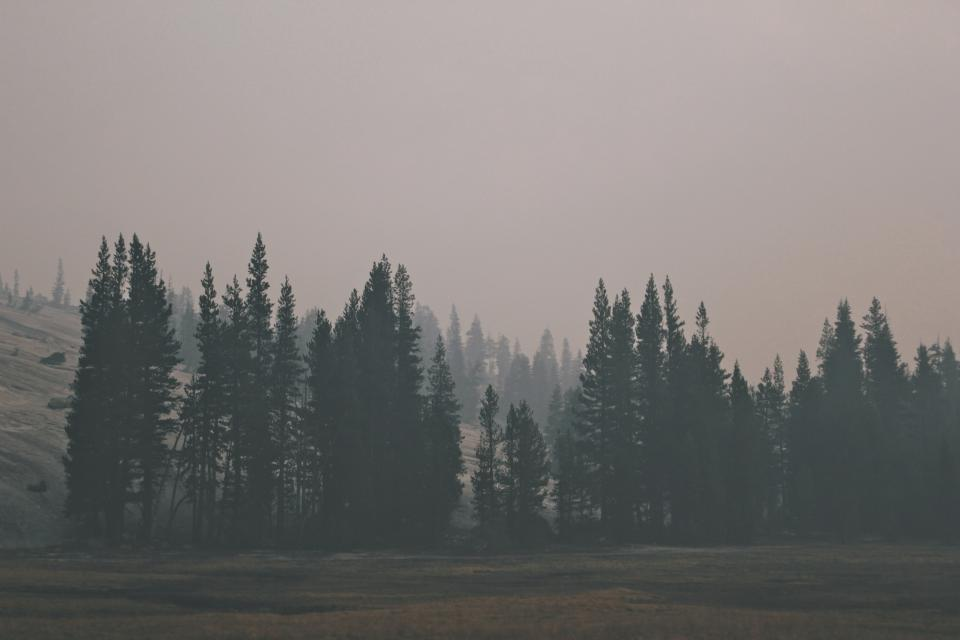 trees forest woods foggy grey landscape nature field grass sky