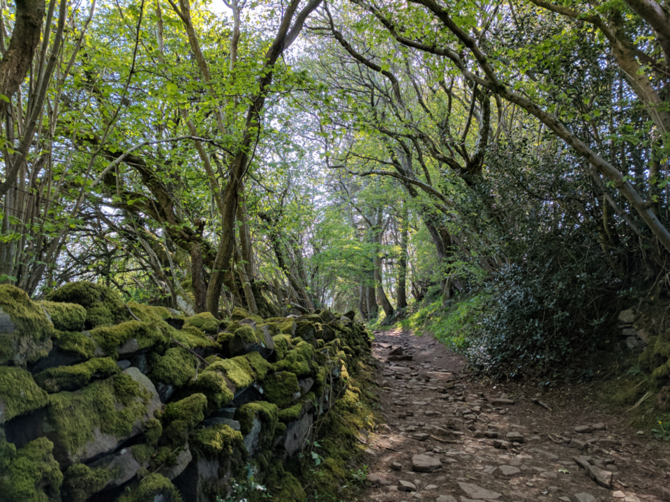 Wales wall moss path forest wood tree wall