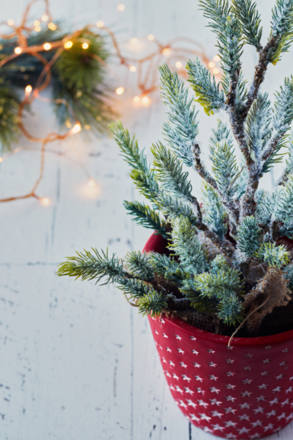 christmas tree background potted small festive plant lights wood holiday decor decoration pine spruce winter xmas nature