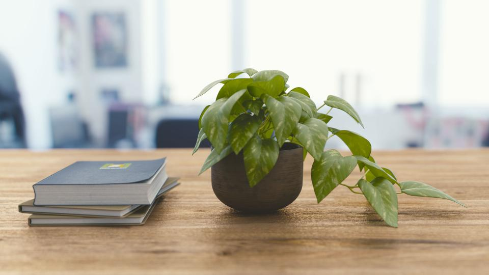 office work business workspace table desk journals notebooks plant pot leaves bokeh still