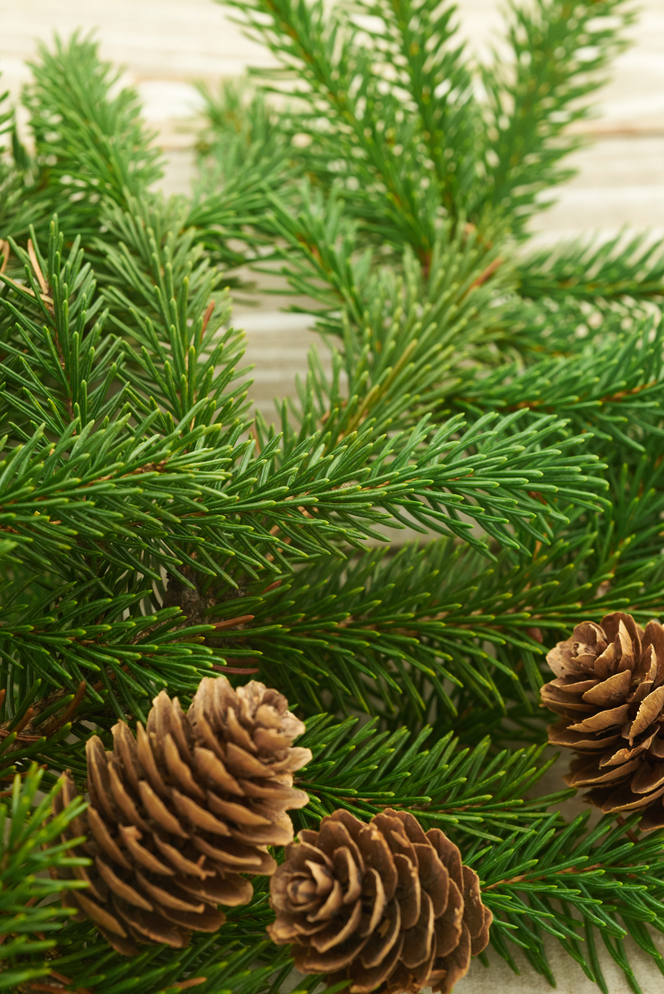 seasonal backgrounds christmas flat lay pine tree branches festive cone holiday merry xmas background