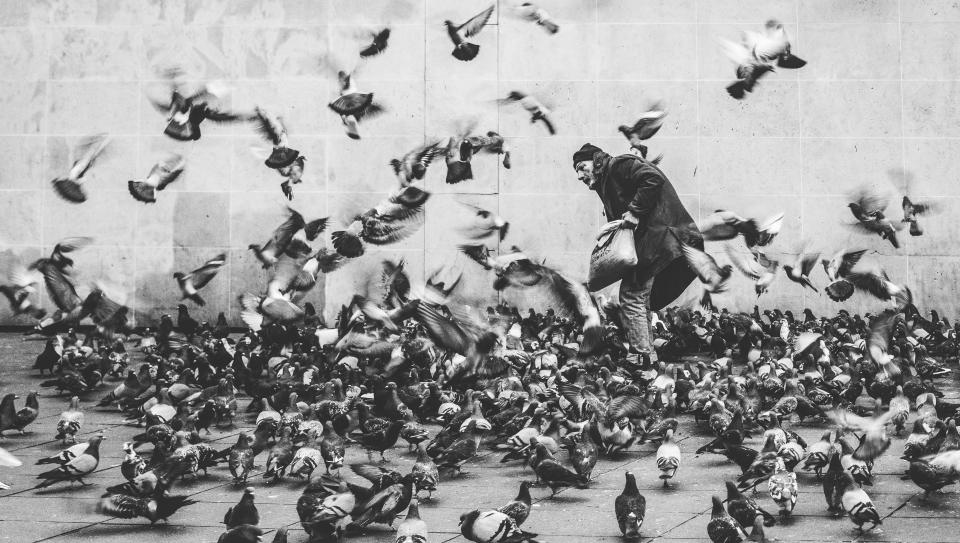 black and white people man dove pigeon birds animal flying park