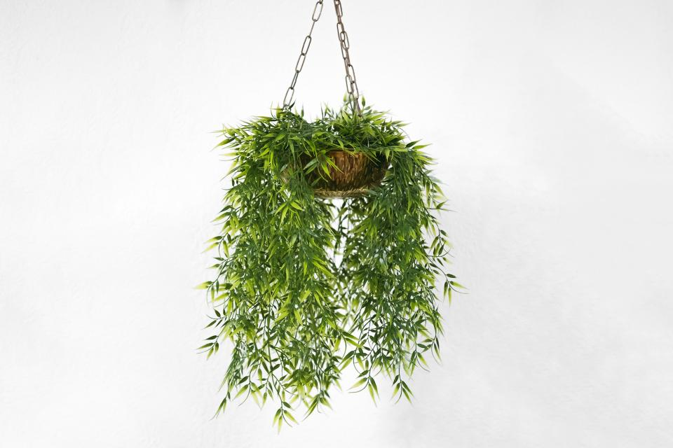 wall plant orchids hanging plants white pot decor outdoor green steel chain