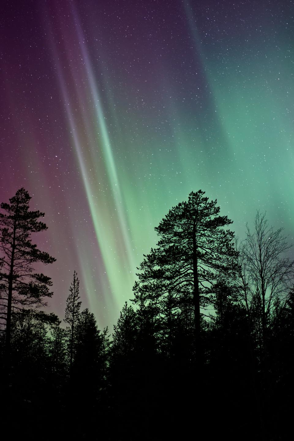 aurora green light atmosphere sky trees plant nature outdoor forest silhouette