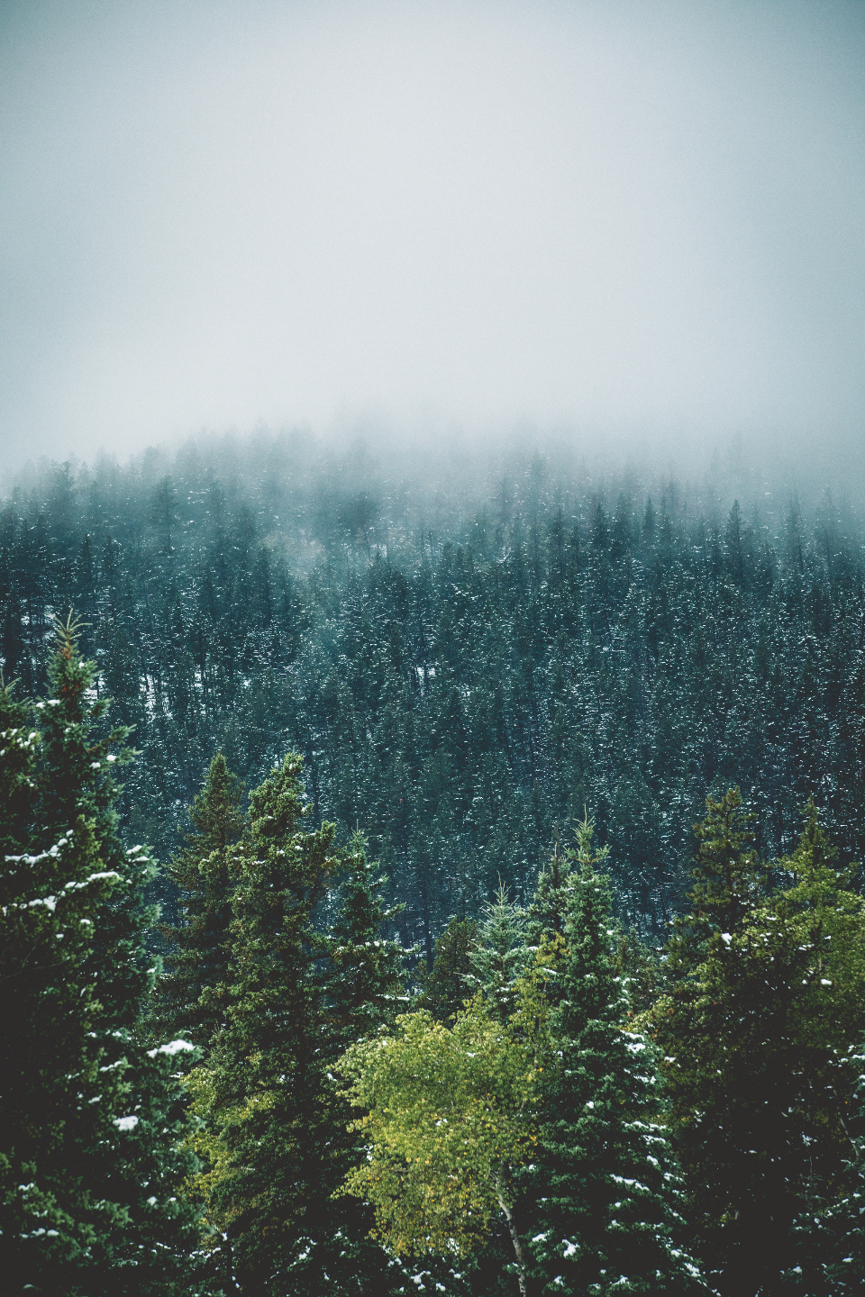 winter snow snowing cold nature earth trees tree fog foggy mountains morning early