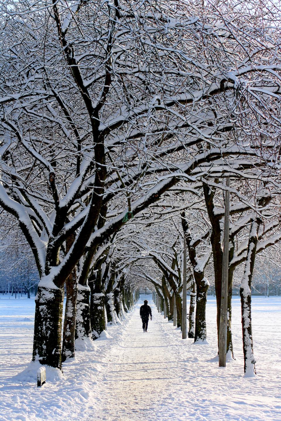 nature snow winter trees people man guy walking white