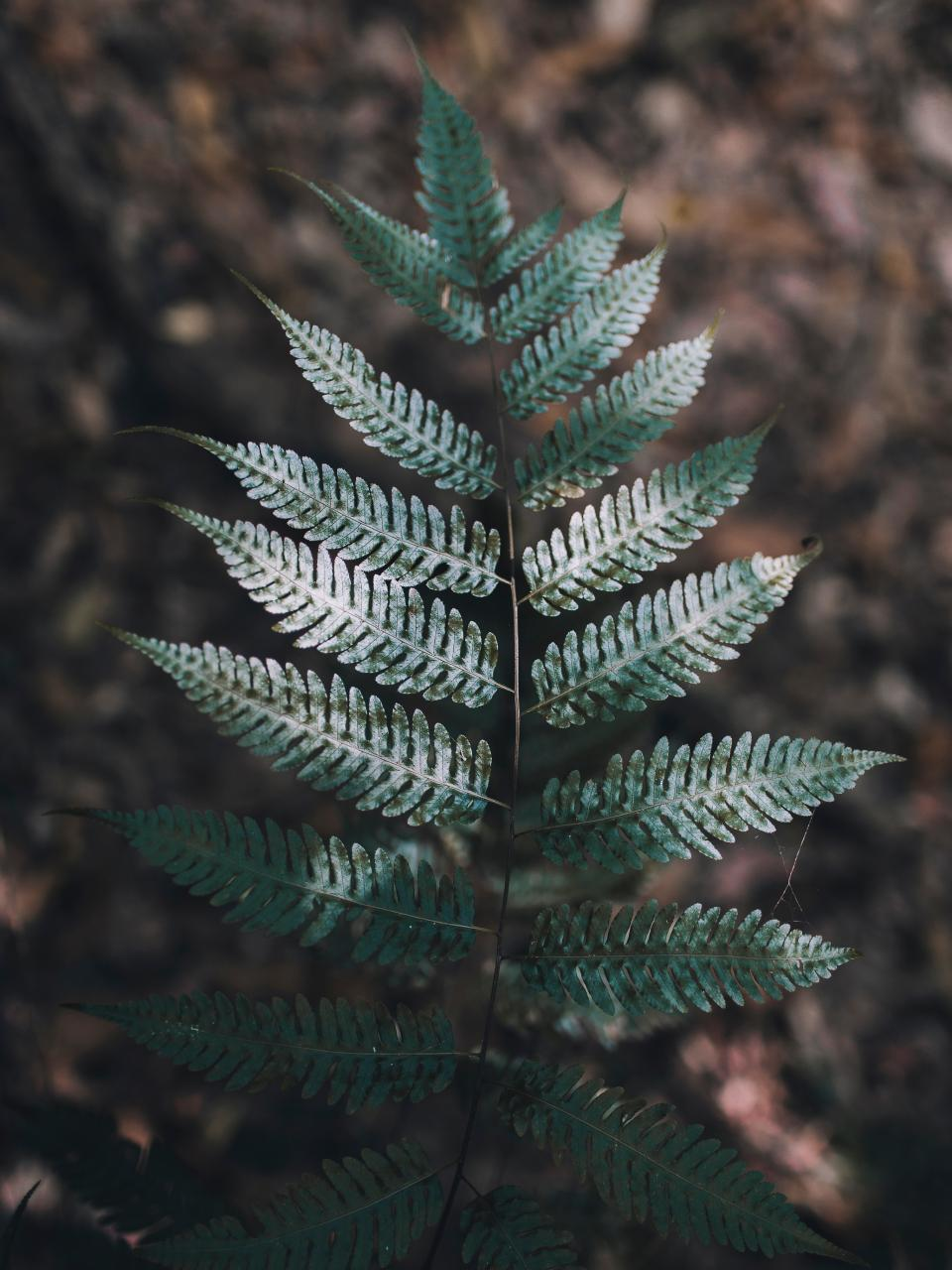 green leaf fern plant nature blur