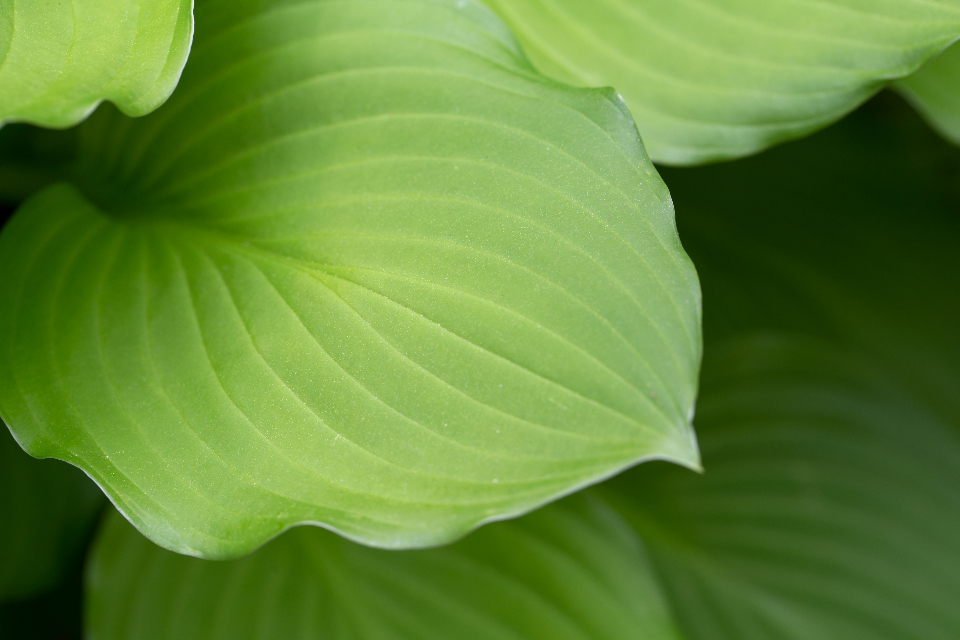 macro plant leaf spring natural texture nature leaves green background growth flora