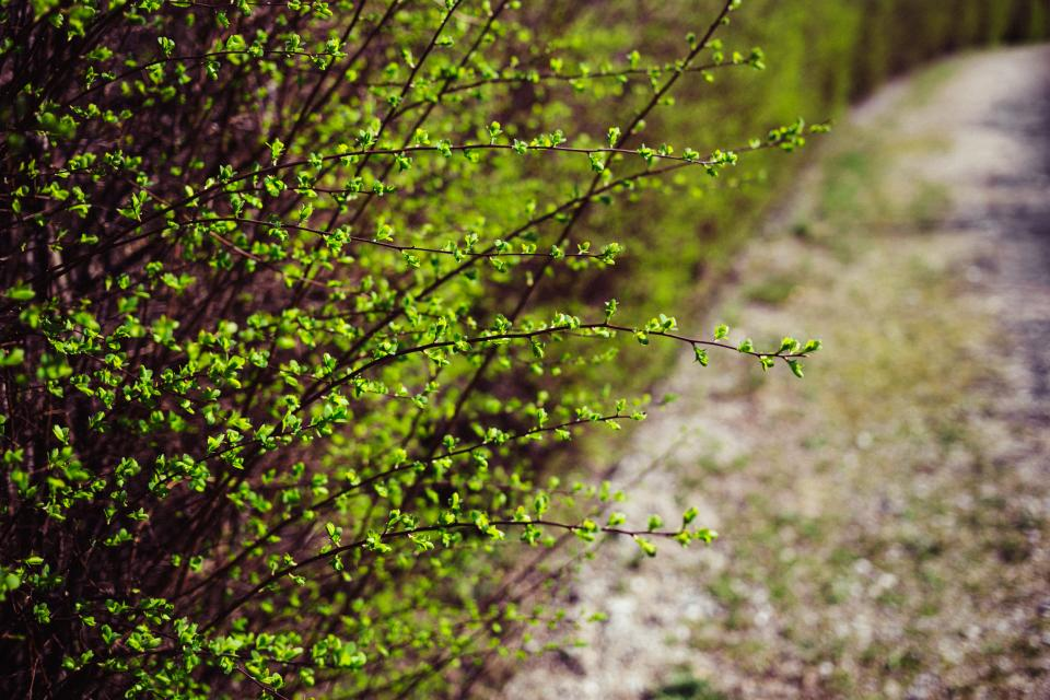 green plants nature outdoor bokeh blur