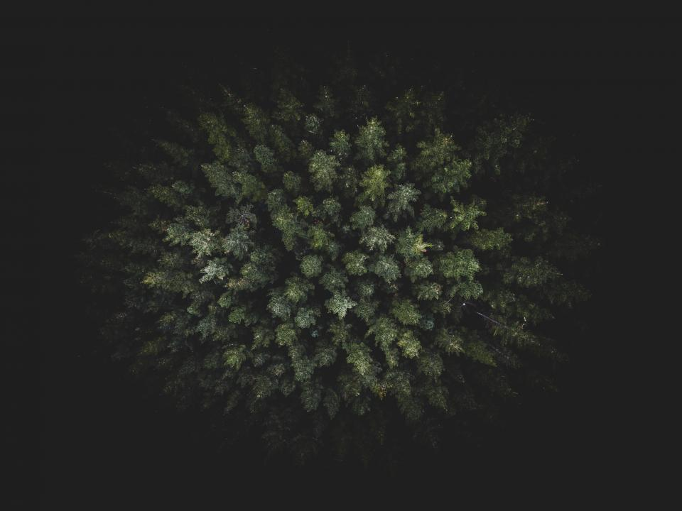 dark green trees plants nature aerial view forests