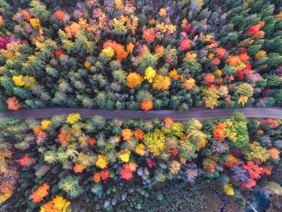 trees clolorful aerial view plant forest nature fall autumn road path