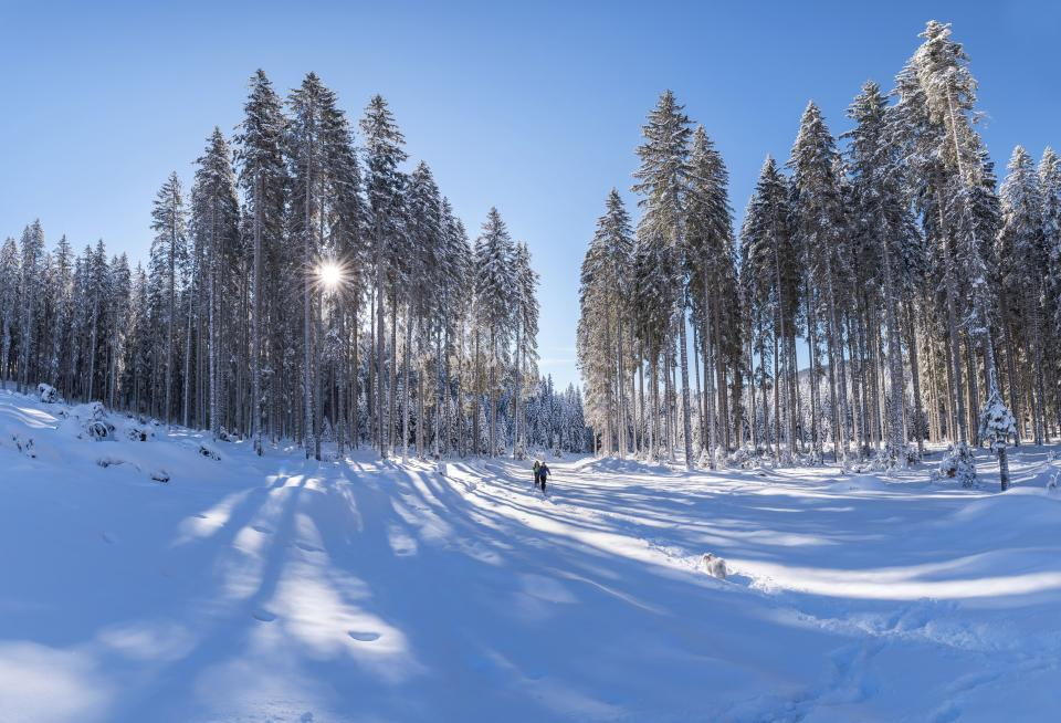 nature landscape woods forest snow winter cold weather travel adventure clouds sky sun