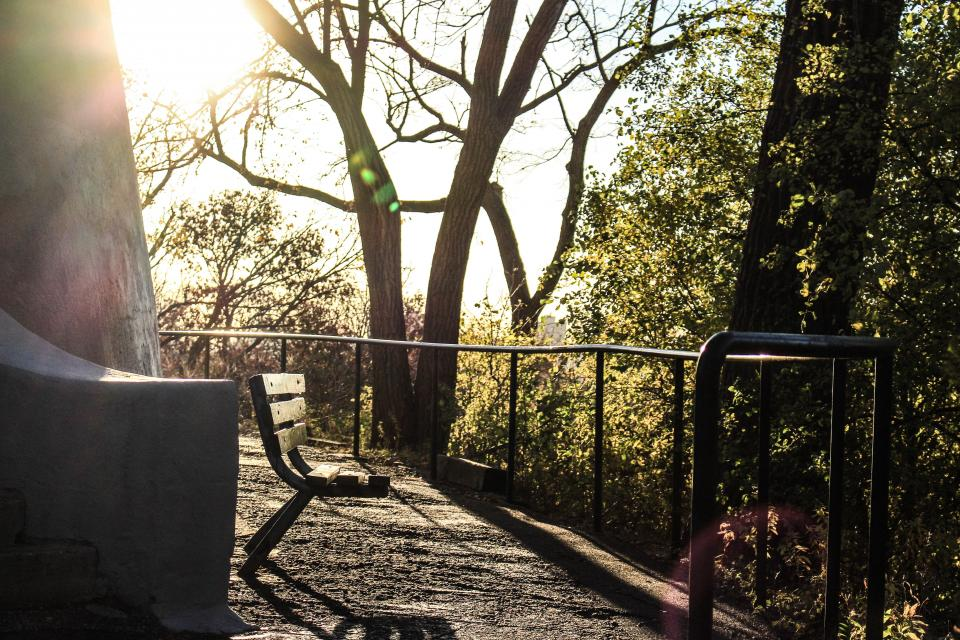 bench sunlight sunny day trees plant nature relaxing fence steel
